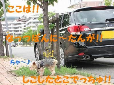 IMG_6031s-.jpg