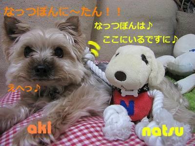 IMG_6071s-.jpg