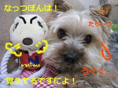 IMG_6088s-.jpg