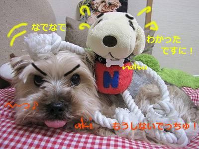 IMG_6107s-.jpg