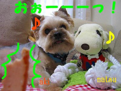 IMG_6198s- のコピー.jpg